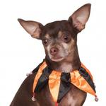View Image 1 of Halloween Jester Dog Collar Scrunchie