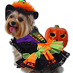 View Image 1 of Halloween Witch Dog Costume