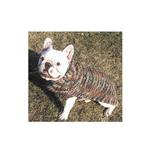 View Image 3 of Handmade Multi-Colored Wool Cable Dog Shawl