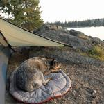 View Image 4 of Highlands Dog Bed by RuffWear - Granite Gray