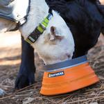 View Image 2 of Hoopie Dog Collar by RuffWear - Aspen