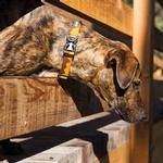 View Image 1 of Hoopie Dog Collar by RuffWear - Teton