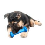 View Image 1 of Hydro Fetch Dog Toy