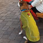 View Image 4 of K-9 Overcoat Utility Dog Jacket by RuffWear - Forest Green