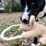 View Image 1 of Kangaroo with Rope Dog Toy