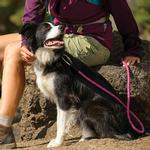 View Image 2 of Knot-A-Leash for Dogs by RuffWear - Purple Dusk
