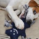 View Image 2 of Knotty Bear Dog Toy