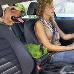 View Image 1 of Kurgo Auto Grass Pet Barrier