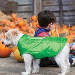 View Image 1 of Kurgo Loft Reversible Dog Jacket - Green and Gray