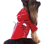 View Image 1 of Lady Bug Raincoat - Red