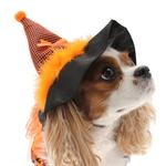 View Image 4 of LED Witch Dog Costume - Orange and Black