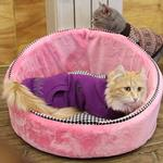View Image 1 of Love Nest Cat Bed by Catspia - Pink