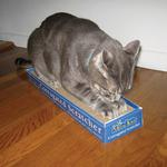 View Image 2 of Meow Town Corrugated Scratcher