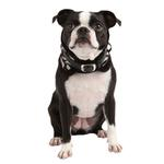 View Image 1 of Modern Zebra Neckguard Dog Collar by Puppia - Black