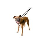 No-Pull Dog Harness Deluxe Training Package - Black and Silver