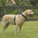 View Image 1 of Patento Pet Dog Harnesses and Leash - Black