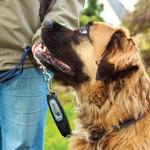 View Image 1 of Patento Pet Dog-e-Walk Premium Dog Trainer System