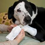 View Image 1 of PawFlex Basic and Joint Dog Bandage Covers