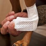 View Image 3 of PawFlex Joint Dog Bandages