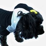 View Image 3 of Penguin Dog Hoodie by Dogo