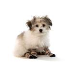 View Image 2 of Pepper's Pet Socks - 3pk