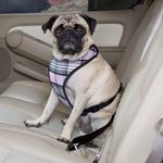 View Image 1 of Plaid Car Harness by Guardian Gear - Pink
