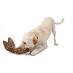 View Image 3 of Pogo Plush Dog Toy - Bunny