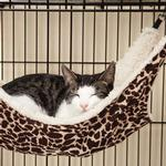 View Image 1 of ProSelect Wild Time Cage  Hammock Cat Bed - Brown