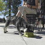 View Image 2 of Quencher Travel Dog Bowl by RuffWear - Lichen Green