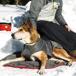 View Image 1 of Quinzee Insulated Dog Jacket by RuffWear - Granite Gray