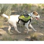 View Image 1 of Recreational Approach Pack by RuffWear - Lichen Green