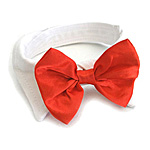 View Image 1 of Red Satin Bowtie Collar