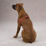 View Image 3 of Reflective Cushion Dog Harness by Zack & Zoey - Red