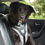 View Image 1 of Safety Dog Harness - Steel Gray
