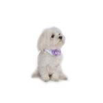 View Image 2 of Satin Dog Bowtie Collar - Lavender