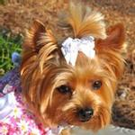View Image 1 of Satin Handmade Dog Bow - White