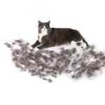 View Image 2 of Short Hair FURminator for Large Cats - Purple