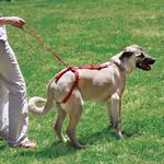 View Image 1 of Silver Tails Bottoms Up Senior Dog Harness