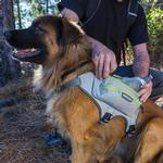 View Image 2 of Singletrak Hydration Dog Pack by RuffWear - Cloudburst Gray