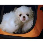 View Image 2 of Sleepypod Air Travel Pet Carrier Bed - Orange Dream