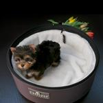 View Image 2 of Sleepypod Mobile Pet Carrier Bed - Dark Chocolate