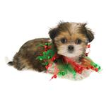 View Image 2 of Smoochers Pet Scrunchie - Christmas Bells