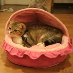 View Image 1 of Snooze Cat Bed by Catspia - Pink