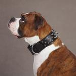 View Image 4 of Spiked Leather Dog Collar by Casual Canine