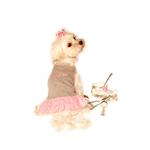 View Image 1 of Sugar & Spice Design Dog Dress - Sugar