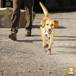 View Image 1 of Summit Dog Boots by Ruffwear - Burnt Orange
