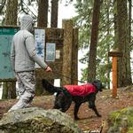 View Image 2 of Sun Shower Dog Rain Jacket by RuffWear - Red Currant