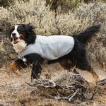 View Image 1 of Swamp Cooler Dog Cooling Vest by RuffWear - Graphite Gray