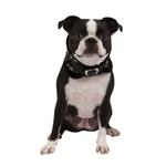 View Image 2 of Tessell Neckguard Dog Collar by Puppia - Black