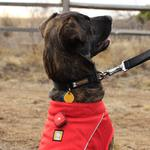 View Image 2 of The Beacon Dog Safety Light by RuffWear